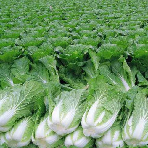 食堂蔬菜猎趣体育nba直播